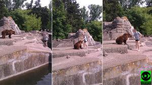 """""""Głupich nie brakuje"""". Zoo chce monitoringu przy wybiegu"""
