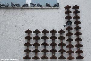 Gołębie zostały na lodzie. Społecznicy kupili im półki