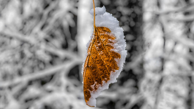 Zaczęła się meteorologiczna zima