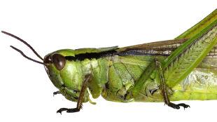 W Beskidzie Niskim znaleziono kilkanaście siedlisk bardzo rzadkiego owada