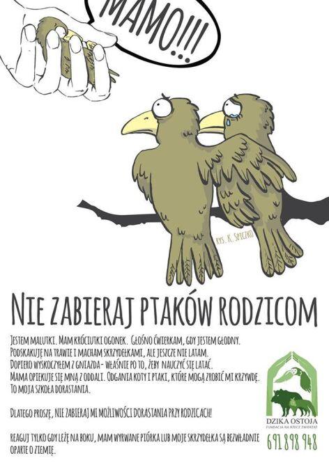 """Plakat opracowany przez Fundacje """"Dzika Ostoja"""""""