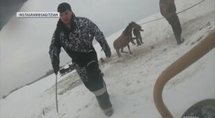 Rolnicy ratują klacze z lodowej pułapki